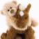 Bear St. GUND Catalog...